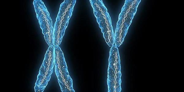 Хромосома убийца