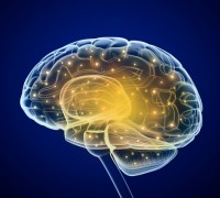 Что нужно мозгу?